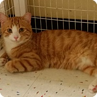Adopt A Pet :: Ben - East Meadow, NY