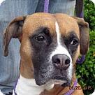 Adopt A Pet :: Nell