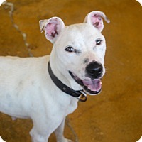 Adopt A Pet :: Maya - Millersville, MD