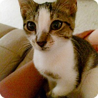 Adopt A Pet :: Lil Punkin - Monroe, GA