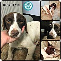 Adopt A Pet :: Braelyn - Kimberton, PA
