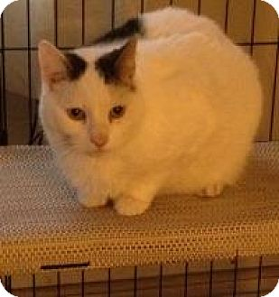 Declawed Cats For Adoption In Delaware
