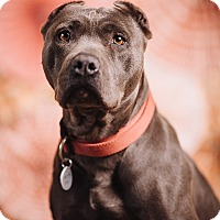 Adopt A Pet :: Baby - Portland, OR