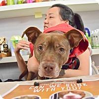 Adopt A Pet :: Robb Stark - Jersey City, NJ