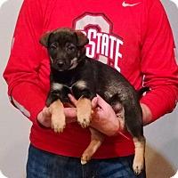 Adopt A Pet :: Gracie - South Euclid, OH