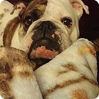 Adopt A Pet :: Taco - Columbus, OH
