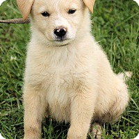 Adopt A Pet :: Mason - Spring Valley, NY