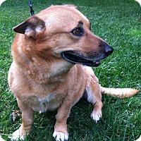 Adopt A Pet :: Floppy - Thompson Falls, MT