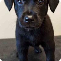 Adopt A Pet :: Tammy - Shorewood, IL