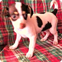 Adopt A Pet :: 4 Dots - La Verne, CA
