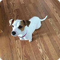 Adopt A Pet :: Bella - Tomah, WI