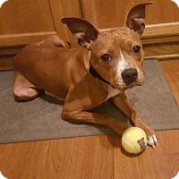 Adopt A Pet :: Penny - Elgin, IL