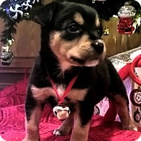 Adopt A Pet :: Oscar - Jasper, TN