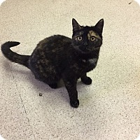Adopt A Pet :: Ginny - Woodstock, ON