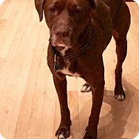 Adopt A Pet :: Vic - Houston, TX