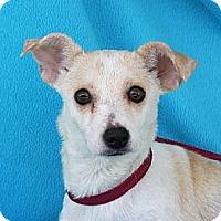 Adopt A Pet :: A291003 Montana - San Antonio, TX