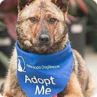 Adopt A Pet :: Lee - Saskatoon, SK