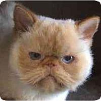 Adopt A Pet :: Smoochie - Davis, CA