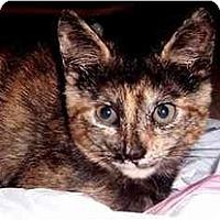 Adopt A Pet :: Alli Tile - Alexandria, VA