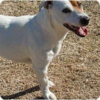 Adopt A Pet :: J.J. - Glenpool, OK