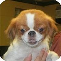 Adopt A Pet :: Jasmine - Antioch, IL