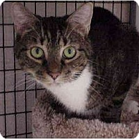 Adopt A Pet :: Sox - Deerfield Beach, FL
