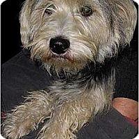 Adopt A Pet :: Tinsel - Lucerne Valley, CA