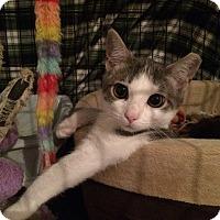 Adopt A Pet :: Gabriella - Speonk, NY