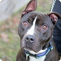 Adopt A Pet :: Eli - Tinton Falls, NJ