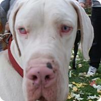 Adopt A Pet :: Finley - Baden, PA