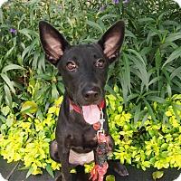 Adopt A Pet :: Manny - Sunnyvale, CA