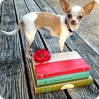 Adopt A Pet :: Matilda - AUSTIN, TX