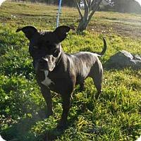 Adopt A Pet :: SASHA - McKinleyville, CA