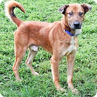 Adopt A Pet :: Rusty - Enfield, CT