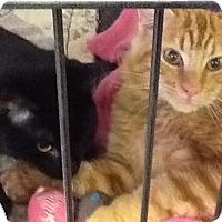 Adopt A Pet :: Brady & Gronk - Acushnet, MA