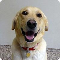 Adopt A Pet :: Diesel - Buckeystown, MD