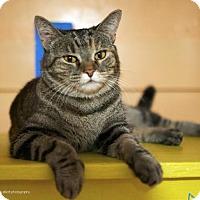 Adopt A Pet :: Tyger - Tucson, AZ