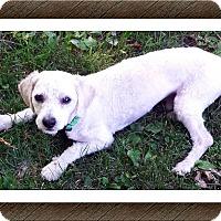 Adopt A Pet :: Adopted!!Browser - MI - Tulsa, OK