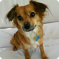 Adopt A Pet :: Penny - Thousand Oaks, CA