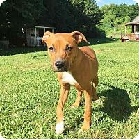 Adopt A Pet :: Candy - Boca Raton, FL