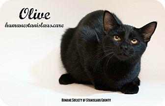 Domestic Shorthair Kitten for adoption in Modesto, California - Olive