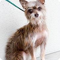 Adopt A Pet :: Lizzie - Helotes, TX