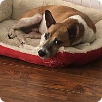 Adopt A Pet :: Nolan - San Antonio, TX
