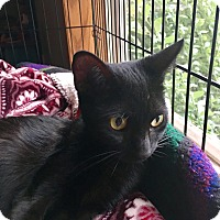 Adopt A Pet :: Blacky - Indianapolis, IN