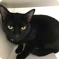 Adopt A Pet :: Elvira - Reisterstown, MD