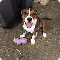 Adopt A Pet :: McKenzie~ meet me! - Glastonbury, CT