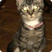Adopt A Pet :: Moodle - Eureka, CA