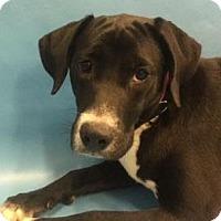 Adopt A Pet :: Brandy D3416 - Shakopee, MN