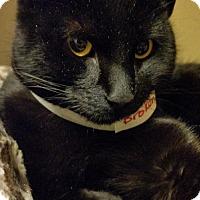 Adopt A Pet :: Iris - Worcester, MA