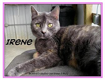 Domestic Shorthair Cat for adoption in Geneseo, Illinois - Irene